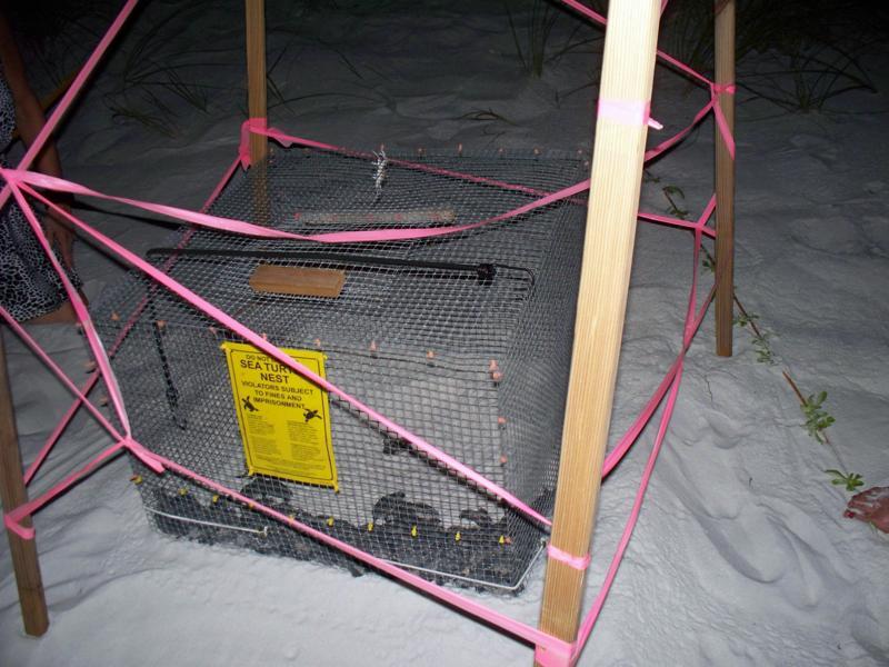nest-4-relocation-program-030