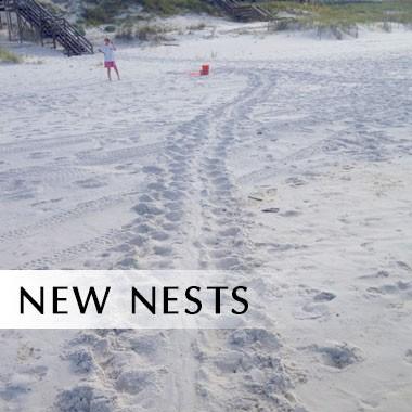 New Nests