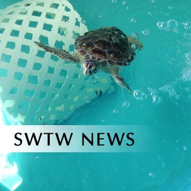 swtw-news