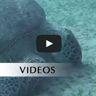 turtle-video-image