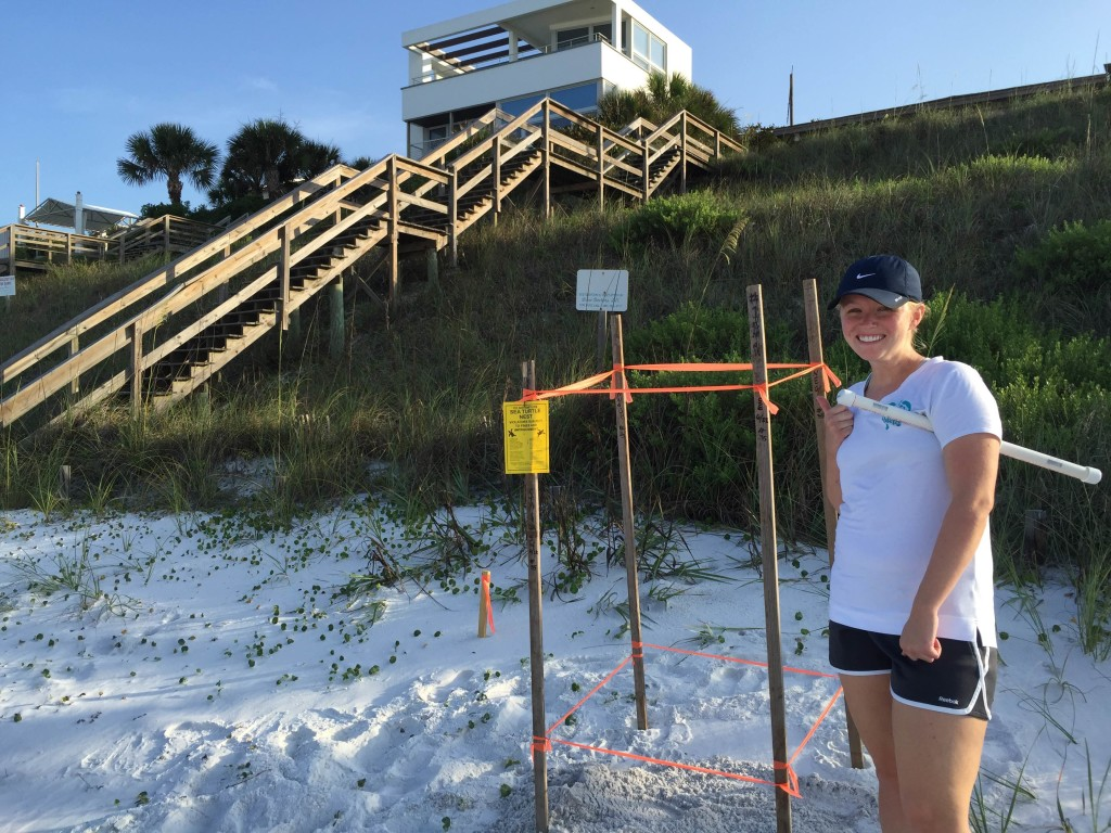 another loggerhead nest for Emily who found 2 nest this morning,  You go girl