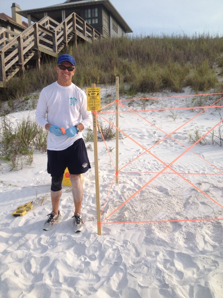 We now have nest # 71 found by Bruce, a loggerhead nest, she laid so low almost water over it. She came up over the escarpment and laid her nest. Must be tired.